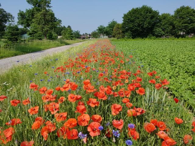 Nach hinten führt der Weg vom Hof zwischen Wiesen und Feld mit Bluehstreifen hinaus.